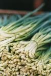 Feria Agricultor Heredia-cebollinWEB